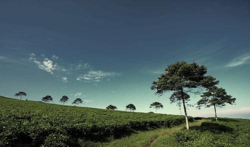 Wisata Bumi Perkemahan Pondok Halimun Sukabumi